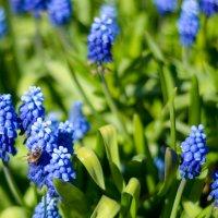 Цветы :: Алексей Игнатьев