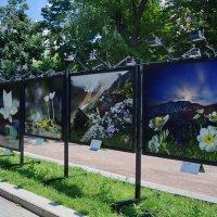 """Выставка фотографий """"Цветы мира - 2"""" :: Татьяна Помогалова"""