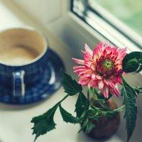 Цветок на окне :: Larissa
