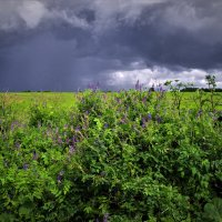 Приближение дождя :: Валерий Талашов