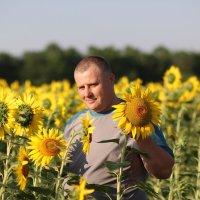 Солнечные цветы :: Наталья Городовая
