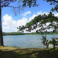 Хорошо ранним утром на озере :: Маргарита Батырева