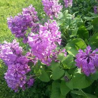 Цветы у дома. :: Наталья Денисова