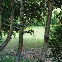 Березы на горном озере :: M Marikfoto