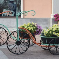 Цветы на колёсах. :: Татьяна Помогалова