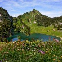 горное разноцветье и разнотравье :: Elena Wymann