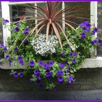 Городские цветы 1 :: Марина Домосилецкая