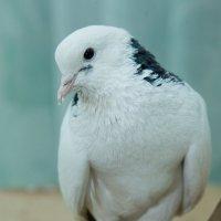 Птица Мира :: KanSky - Карен Чахалян