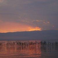 Охридское озеро. Закат :: Gal` ka