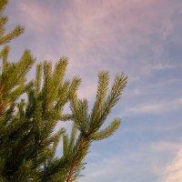 Ветви и небо :: Павел Зюзин