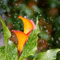 Цветы после дождя - 1 :: Василий Игумнов