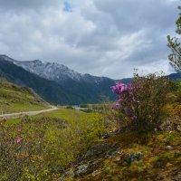 Маральник в долине Катуни. :: Валерий Медведев