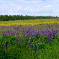 В поле :: Лара Dor