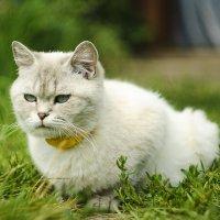 кошкин мир :: Евгений
