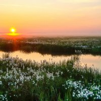 Ямальская тундра летом :: Константин Ольховка