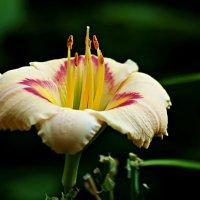 цветочный салют :: Александр Корчемный