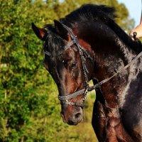лошадковый портрет) :: Юлия Маркелова