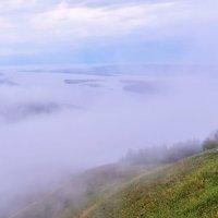 Туман над рекой. :: Елена Савчук