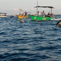 Дельфины :: Dmitriy Sagurov