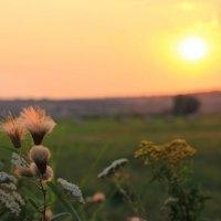 На закате июля :: оксана косатенко