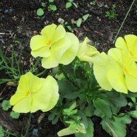 Жёлтые цветочки :: Дмитрий Никитин