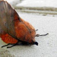 У ночной бабочки  тихий час :: Николай Сапегин