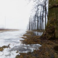 А весна так много обещала... :: Владимир Колесников