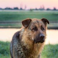 Собака :: Андрей Кузнецов