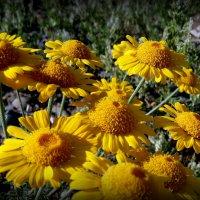 Бабочка и цветы. :: Мила Бовкун
