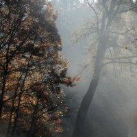Осенний свет....... :: Юрий Цыплятников