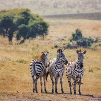Под палящим солнцем...Танзания! :: Александр Вивчарик