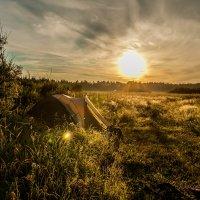 утреннее солнце :: Алексей Астапенко