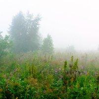 Утро в горах. :: Геннадий Оробей