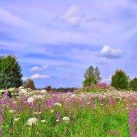 Полевые цветы...Полевые... :: Алла Кочергина