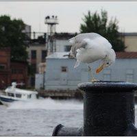 как провожают пароходы? а вот не так, как катера! :: sv.kaschuk