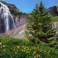 цветы у водопада :: Elena Wymann