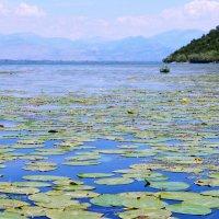Скадарское озеро :: Gal` ka