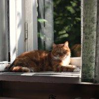 Мой кот Кокос.У Кокоса Юбилей 10 лет! :: Виталий Виницкий