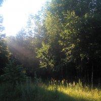 раннее утро в лесу :: александр дмитриев