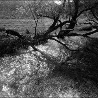 Черно-белая Река :: Ахмед Овезмухаммедов