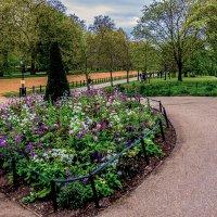 лужайка в английском парке :: Александр Липовецкий
