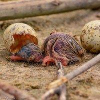 Рождение чайки :: Валерий Горбунов