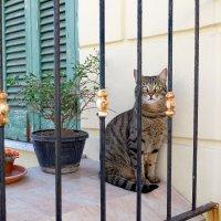 Кошка с острова Липари :: Олег Патрин