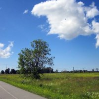 За город по велосипедной дорожке :: veera (veerra)
