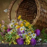 Полевые цветы :: Evgeniy Belkov