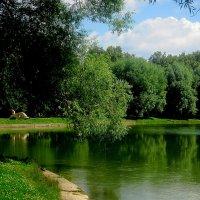 Летом на озере г.Раменское :: Елена Семигина