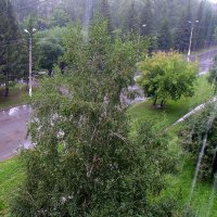 А у нас сегодня дождь , а у вас ? :: Мила Бовкун