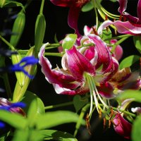хороши весной в саду цветочки ... :: Petr @+