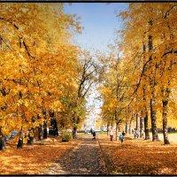 Золотистая осень :: Слава Зайцев