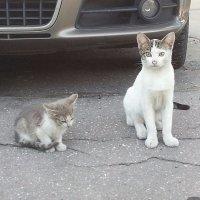 Пять минут из жизни бездомного котёнка... :: Наталья Владимировна